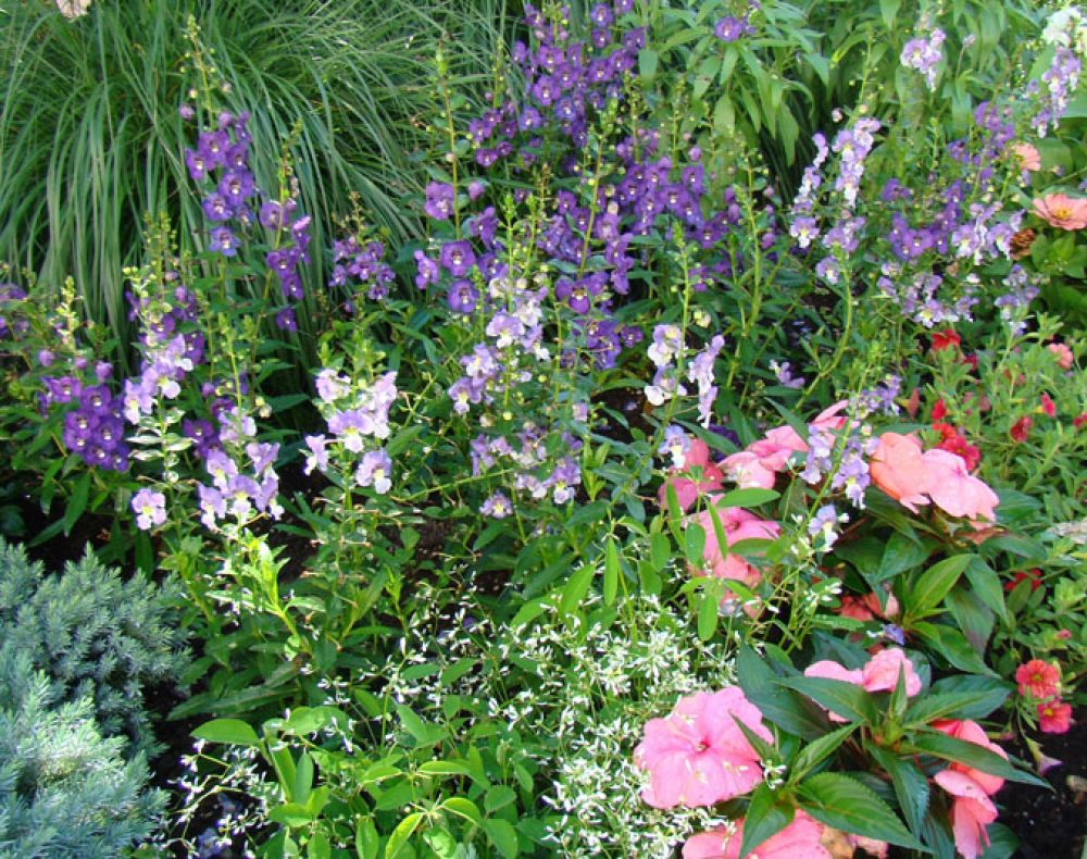 Fairfield landscape design plants