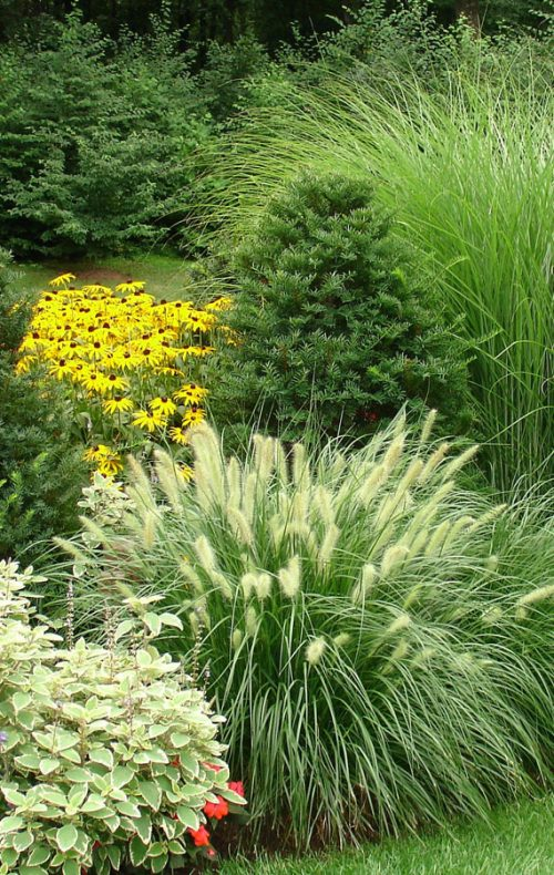 Fairfield landscape design grasses
