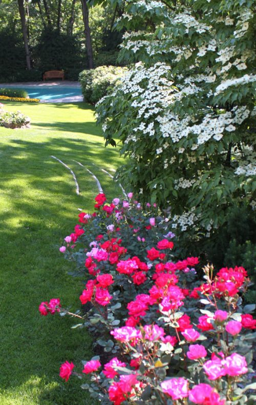 Westchester landscape and pool design lawn and plantings