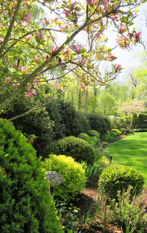 Lawn and border garden with flowering trees