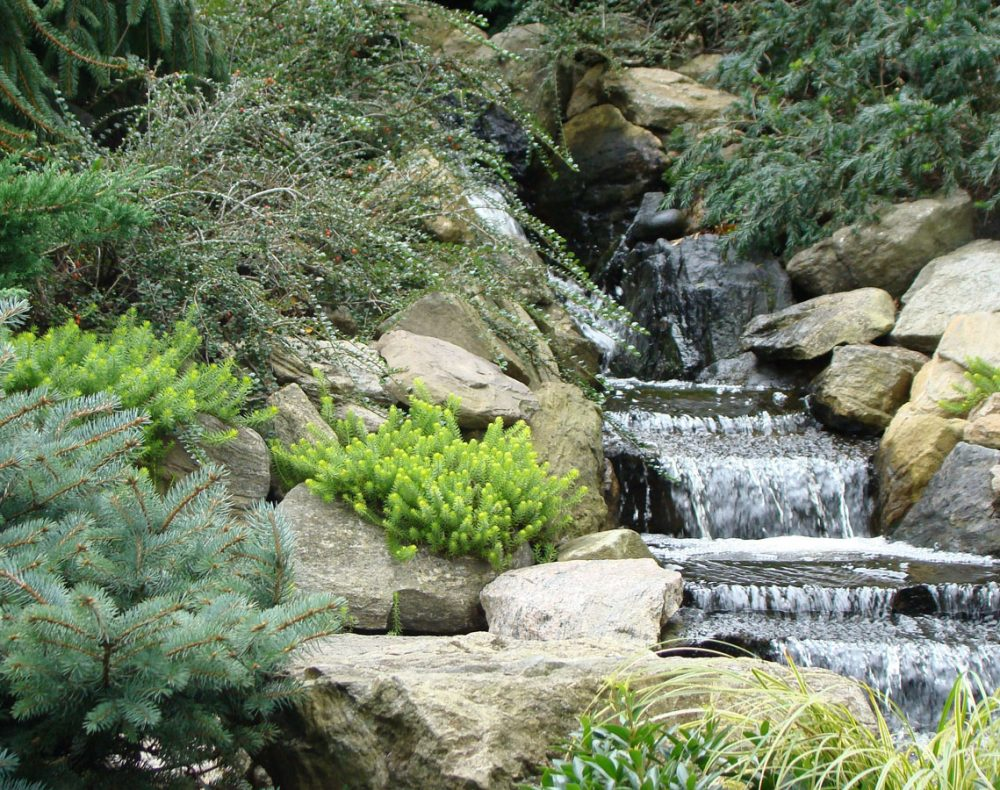 Stream and evergreens in New York garden