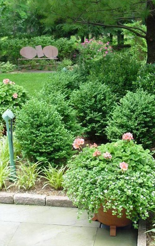 Shrub plantings by Johnsen Landscapes & Pools