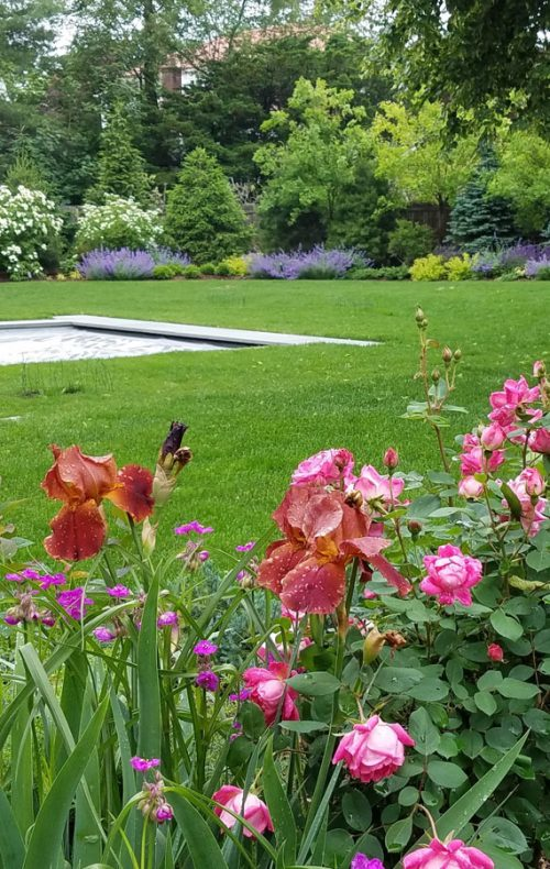Garden beds and lawn in Westchester, NY - swimming pool landscape design
